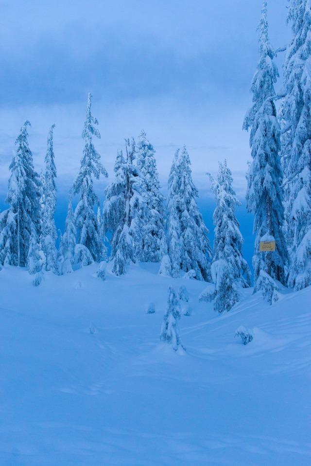 2017-01-01-snowshoe-hike-mt-seymour-026