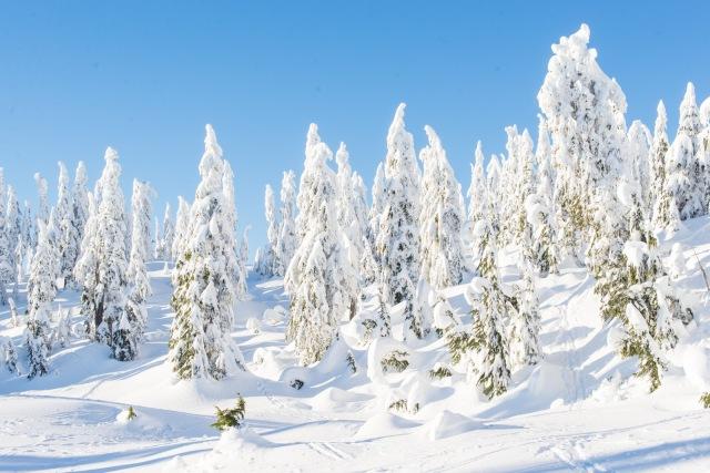 2017-01-02-snowshoe-hike-hullyburn-mountain-049